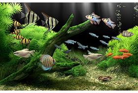 Dream Aquarium 1.293